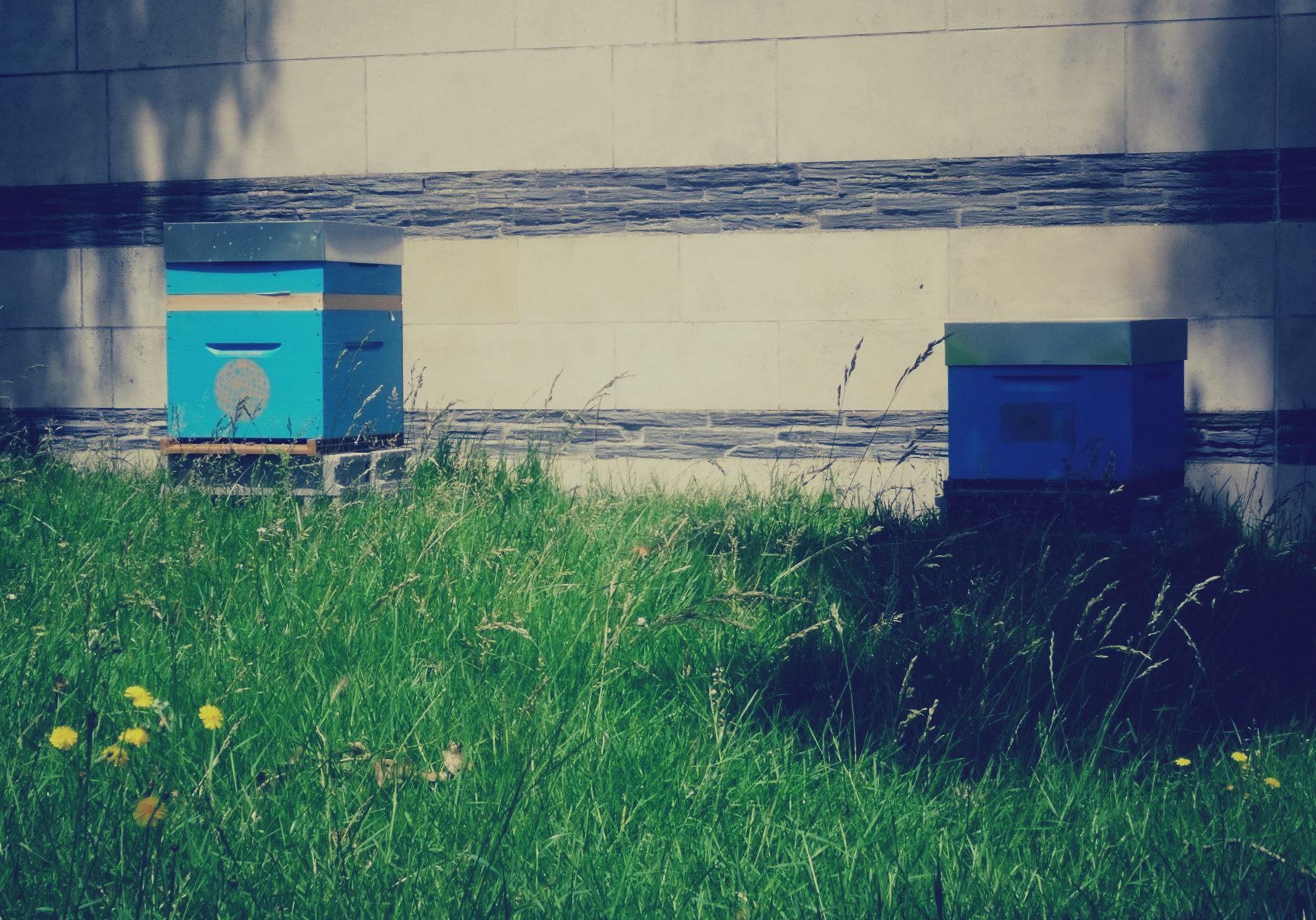 Les ruches au parc du CRAPA sur l'île de Nantes